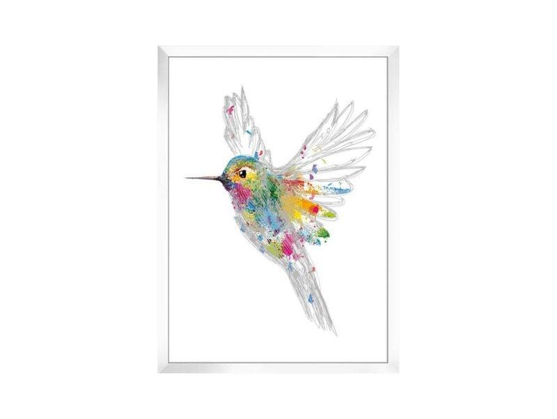 Obraz Koliber