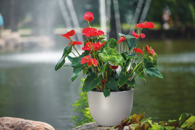 Sztuczne kwiaty - hit czy kit