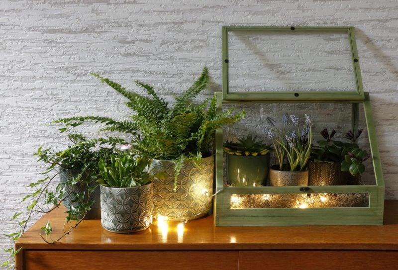 Szklarnia pełna roślin