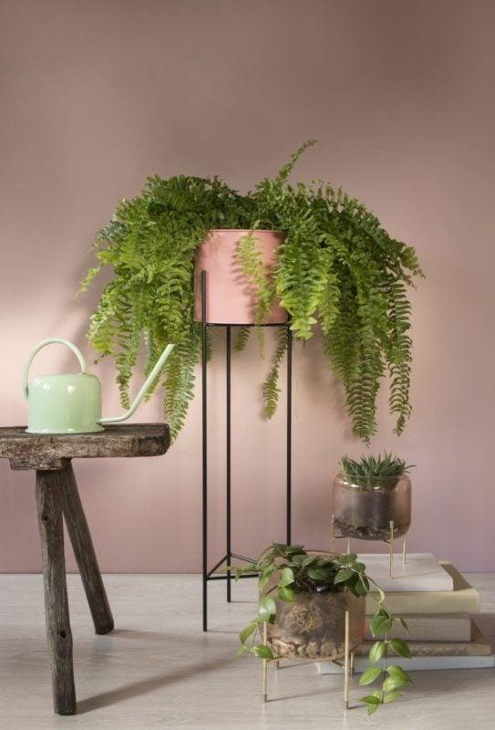 To Ci się przyda: szklane wazony i rośliny