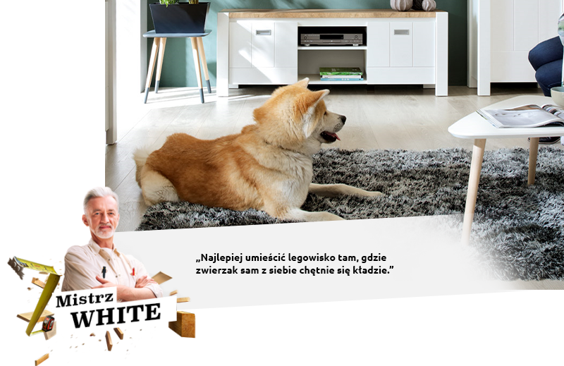 Mistrz WHITE: Najlepiej umieścić legowisko tam, gdzie zwierzak sam z siebie chętnie się kładzie.