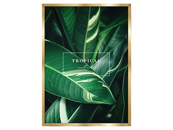 obraz Tropical Nature, 80235